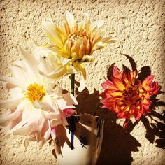 Late dahlias in my little courtyard ..... .....searchwandercollect#botanicalpickmeup #thelittlethings #slowliving #naturehippys #inspiredbypetals #botanicalforagersunitedsocietyinc #lovelysquares_1 #7flowers_1day  #snap_ish #fouriadore #softdreamyphotography #petalsandprops