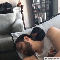 Nap time! | Gif Finder – Find and Share funny animated gifs