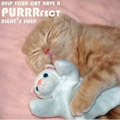 Choosing the right-at-night kitty bed can be a real challenge! Read this Cat-tastic article to find out how to choose the perfect bed for your cat!