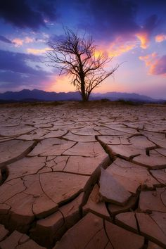 "Photo ""Dry Land"" by Abdulmajeed Aljuhani ( Amazing Sunsets, Amazing Nature, Tree Photography, Landscape Photography, Theme Tattoo, Beautiful World, Beautiful Places, Dry Tree, Dry Desert"
