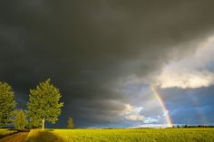Photograph After the Rain by Rimantas Bikulčius on 500px