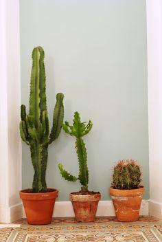 Nature decor for your wellbeing Indoor Cactus, Indoor Planters, Outdoor Plants, Indoor Garden, Cacti And Succulents, Planting Succulents, Planting Flowers, Cactus Planta, Cactus Y Suculentas