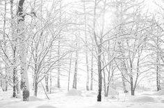 dolefulness:    snowy trees (by jollila)
