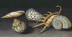 Balthasar van der Ast  Shells on a Table: A Fragment