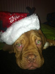 This dog cannot wait for the 21st Dec when Text Santa will be on!
