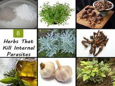 8 Herbs That Kill Internal Parasites | Health & Natural Living
