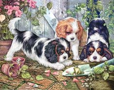 "Cavalier King Charles note cards are 5 1/2"" x 4 1/4"" and come in packages of 10 cards. One design per package. All designs include envelopes. Blank inside."