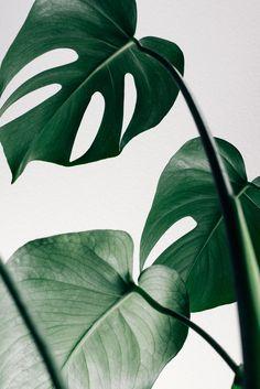 We vinden planten mooi, maar willen het liefst exemplaren die weinig verzorging nodig hebben. Voila, een handig lijstje om te bestuderen!