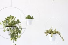 A new twist on the classic mid-century plant holder. Hoop is 18 in diameter and fits a 6 pot. Choose just the plant hanger or add a plant pot in the following options: Sherbet Fawn Light Gray White Matte Black Terra Cotta All pots shown in images above. These are ready to ship.