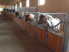 Mini Horse Barn, Miniature Horse Barn, Miniature Ponies, Horse Barn Plans, Mini Horses, Miniature Goats, Baby Horses, Luxury Horse Barns, Horse Barn Designs