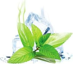 Try our Menthol Flavor Glass Vase, Plant Leaves, Plants, Fresh, Mint, Syrup, Canning, Plant, Planets