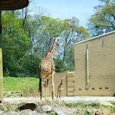 Greenville Zoo, Greenville, SC