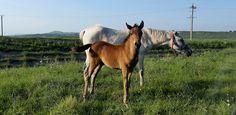 Creație nouă - Google Foto Horses, Photo And Video, Google, Model, Animals, Animales, Animaux, Scale Model, Animais
