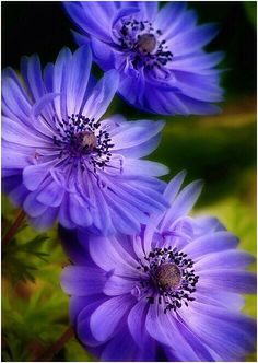 Blue #flowers