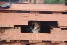 Pet DIY Shelter Cats Pallet