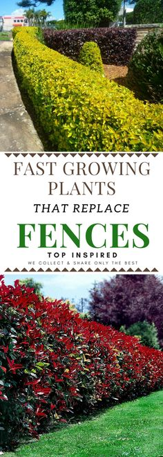 Front Yard Landscaping Beautiful Plants You Can Grow Instead Of A Fence - 101 Gardening Garden Shrubs, Landscaping Plants, Shade Garden, Fence Plants, Landscaping Ideas, Luxury Landscaping, Landscaping Software, Boarder Plants, Privacy Fence Landscaping