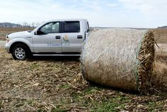 Farmers seek new sources of forage