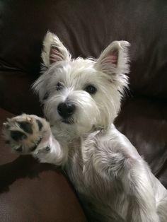 gimme a high five...