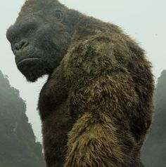 The MonsterVerse King Kong  (キングコング Kingu Kongu?) is a giant ape daikaiju created by Legendary Pictures that first appeared in the 2017 MonsterVerse film Kong: Skull Island. He will also appear in the 2020 film Godzilla vs. Kong, where he will have his long-awaited rematch with Godzilla.