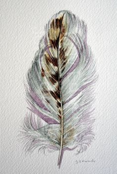 Feather Watercolor Red - Tailed Hawk Feather Study 520 - Nightly Study - Original Watercolor. $40.00, via Etsy.