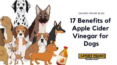 17 Benefits of Apple Cider Vinegar for Dogs | Savory Prime Pet Treats