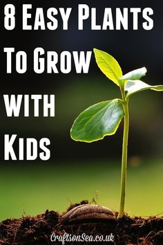 8 Easy Plants To Grow With Kids - Crafts on Sea