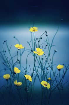 Discover the meaning behind the prayer for serenity. Read all versions of the Serenity Prayer and its History. God grant me the serenity to accept the things I . Yellow Flowers, Wild Flowers, Beautiful Flowers, Beautiful Pictures, Exotic Flowers, Simply Beautiful, Foto Picture, Foto Poster, Mother Nature