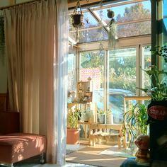 女性で、、家族住まいのサンルーム/エアプランツ/グリーン/Sachikoちゃん❤︎/子供と暮らす。…などについてのインテリア実例を紹介。「おはようございます(*^^*) いい天気です♪♪」(この写真は 2015-10-27 08:41:37 に共有されました)