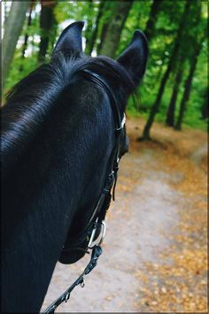 Horses are guardian angles. : Photo