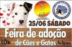 BONDE DA BARDOT: RJ: Casa dos Anjos realiza Campanha de Adoção em Macaé neste sábado (25/06)