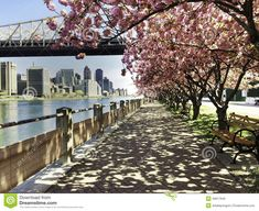 City View with Cherry Blossoms, New York. The skyline of Manhattan is seen under , Walkway, Serenity, New York Skyline, Sunrise, Sidewalk, Bloom, Island, Stock Photos, City