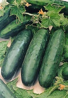 mature nl cucumber
