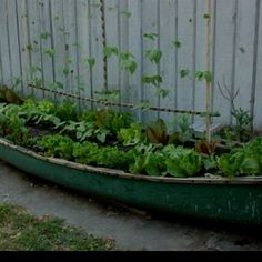 Decorate and Garden! This is a great idea for the lake house who's yard floods too much for a garden! SOOO Cute!!