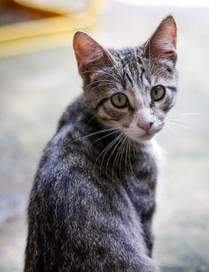 [フリー写真] 振り返る子猫