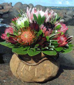 Hawaiian Flowers- Pin Cushion and Pink Mink Proteas Tropical Flower Arrangements, Tropical Flowers, Kailua Kona Hawaii, Protea Art, Flower Boutique, Hawaiian Flowers, Day Lilies, Wedding Humor, Science Nature