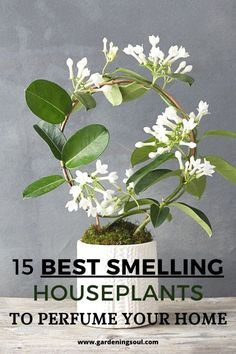 Here we've rounded up the most aromatic plants that adapt well to life indoors. 15 Best Smelling Houseplants To Perfume Your Home Decoration Plante, Inside Plants, Best Indoor Plants, Garden Plants, Nature Plants, Herb Garden, Garden Bar, Big Garden, Nature Nature
