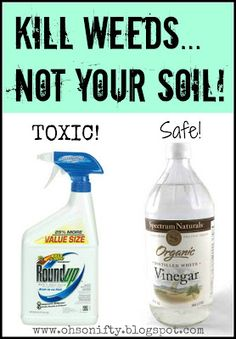 Gardening the Natural Way... Safe non-toxic way to kill weeds! Say no to RounpUp and hello to vinegar!