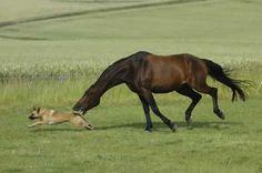 pasture guardian