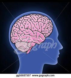 homosexual brain study 2014     http://www.bbc.co.uk/news/magazine-26089486