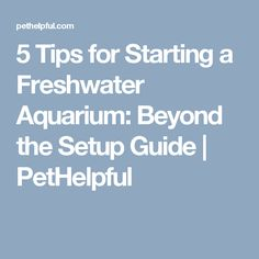 5 Tips for Starting a Freshwater Aquarium: Beyond the Setup Guide | PetHelpful