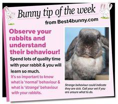 Bunny tip - Observe & understand their behaviour. www.best4bunny.com