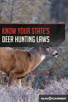 Hunting Laws | Deer Season and Hunting Laws by State by Gun Carrier at http://guncarrier.com/hunting-laws-deer-season-by-state