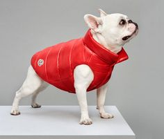 moncler keeps pooches toasty and trendy with line of luxury puffer jackets for dogs  www.designboom.com