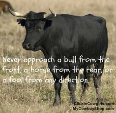 ~ Never approach a bull from the front, a horse from the rear, or a fool from any direction. -unknown