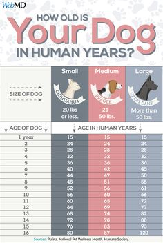 to Calculate Your Dog's Age How old is your dog in human years? Use this chart to calculate your pup's age.How old is your dog in human years? Use this chart to calculate your pup's age. Background Grey, Dog Body Language, Dog Health Tips, Pet Health, Dog Grooming Tips, Dog Ages, Easiest Dogs To Train, Dog Information, Puppy Care