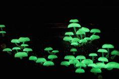Steve Axford's amazing fungi photos