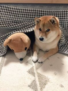 Doge!!