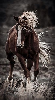 A horse is a thing of beauty... none will tire of looking at him as long as he displays himself in his splendor. Xenophon