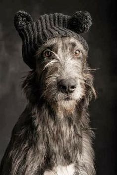 5 Dog Breeds that Unfortunately have shorter lifespans