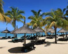 Am wunderbaren Strand Mauritius, Strand, Patio, Outdoor Decor, Tropical Paradise, Ocean, Island, Yard, Terrace